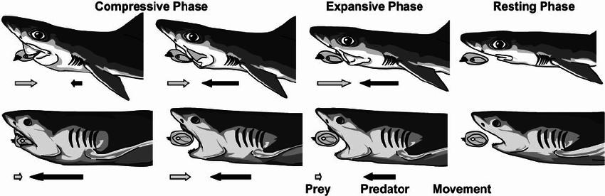 Name:  Shark_Feeding.png Views: 885 Size:  77.1 KB