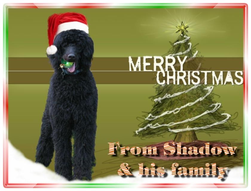 Name:  shadow-christmas-card-3.jpg Views: 563 Size:  291.5 KB